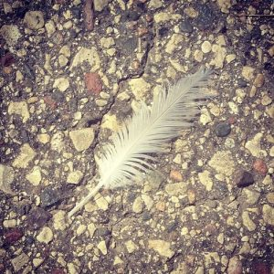 white feather = angels in your midst (say hello!)